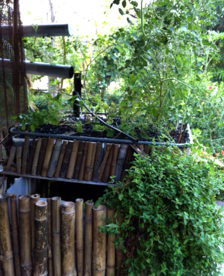 Source Extra Kitchen Scraps For Backyard Flocks: Home Scale IBC Tote System