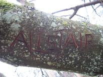 treename1
