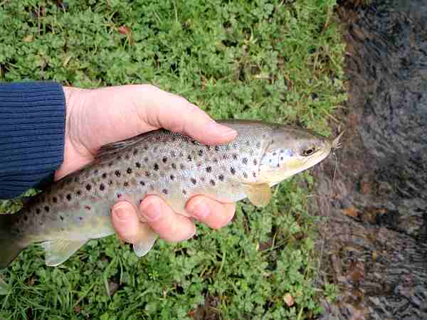 First Trout of 2009