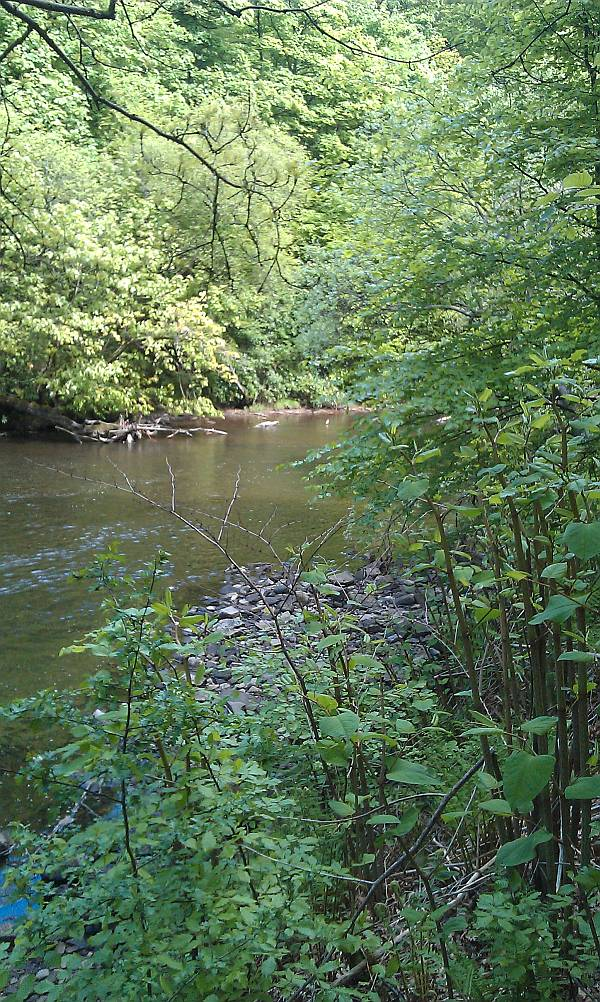 Looking downstream....