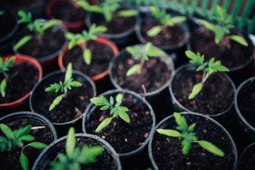 kaboompics_Green garden plants