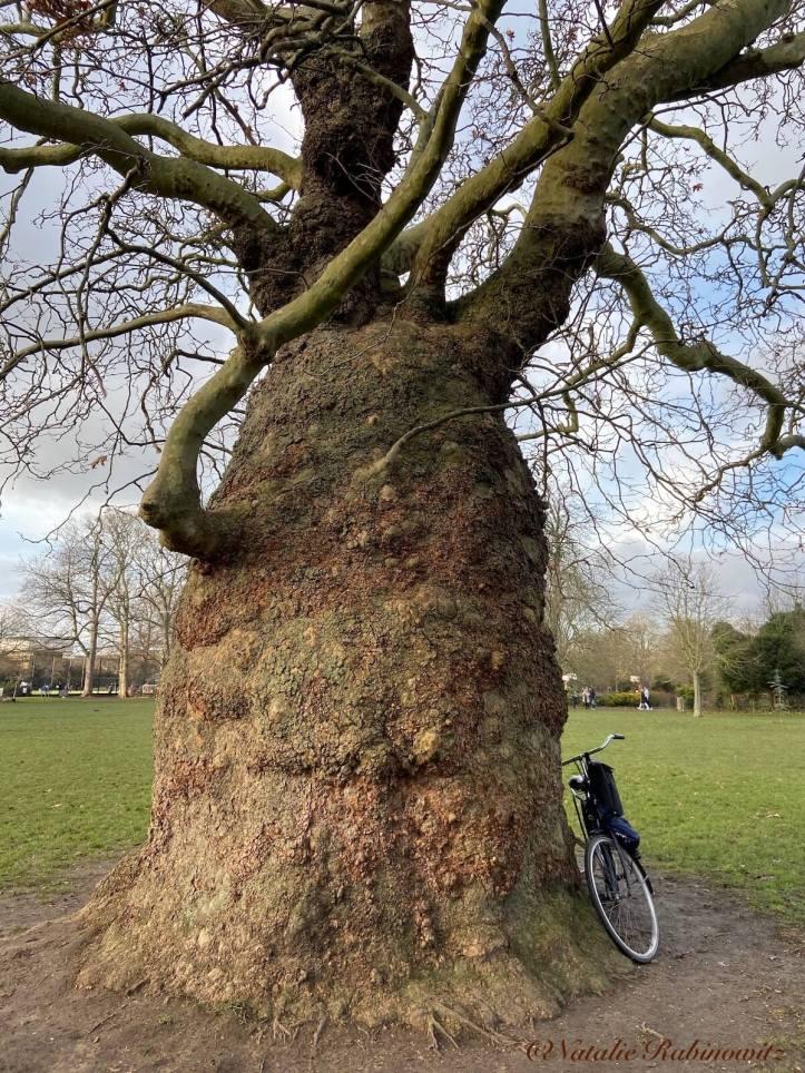 Baobab Hammersmith