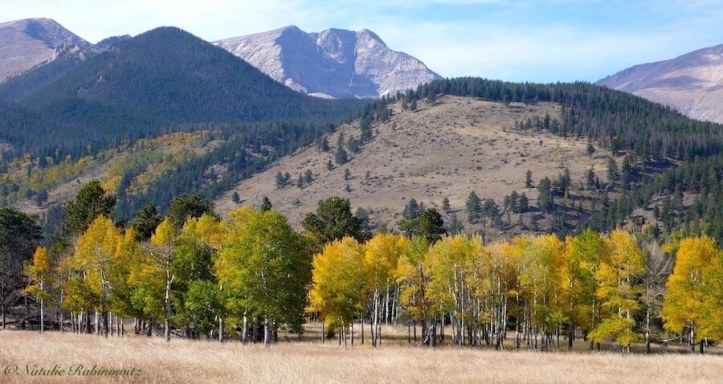 Aspens Rocky Mountain National Park