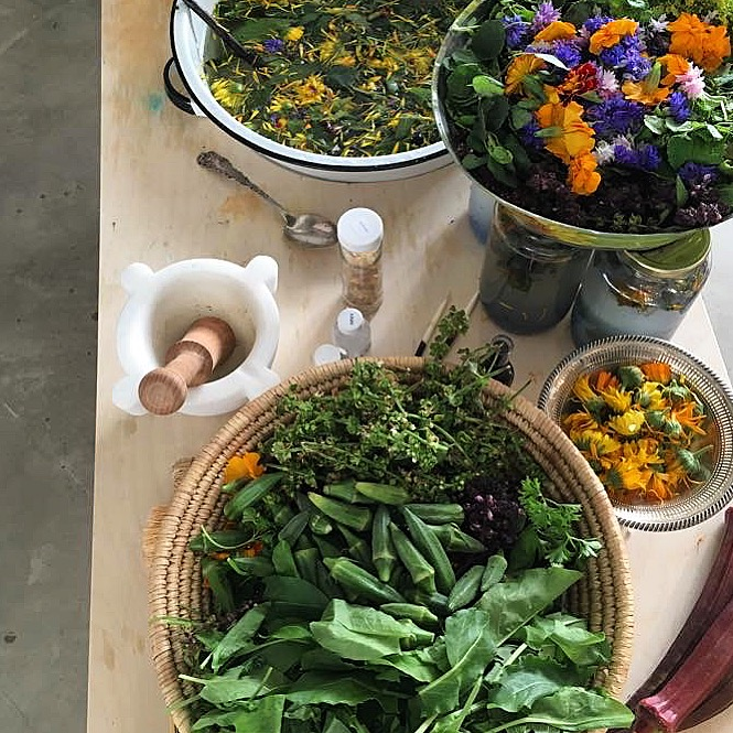 Medicinal Herb Harvest & Use