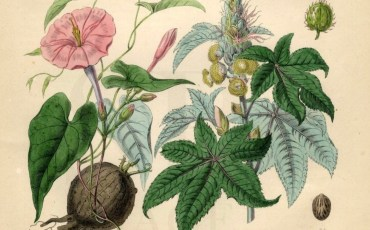 Medicinal and Culinary Herb Garden Planning