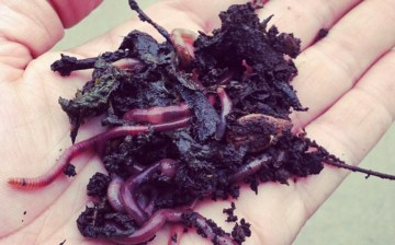 Compost and Vermicompost 101