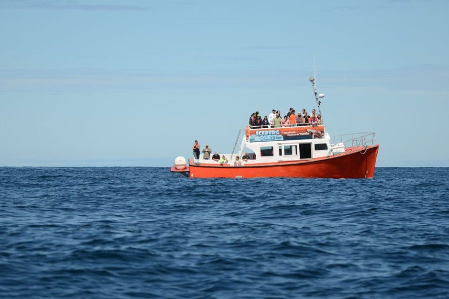 Whale Watching in Twillingate, Newfoundland