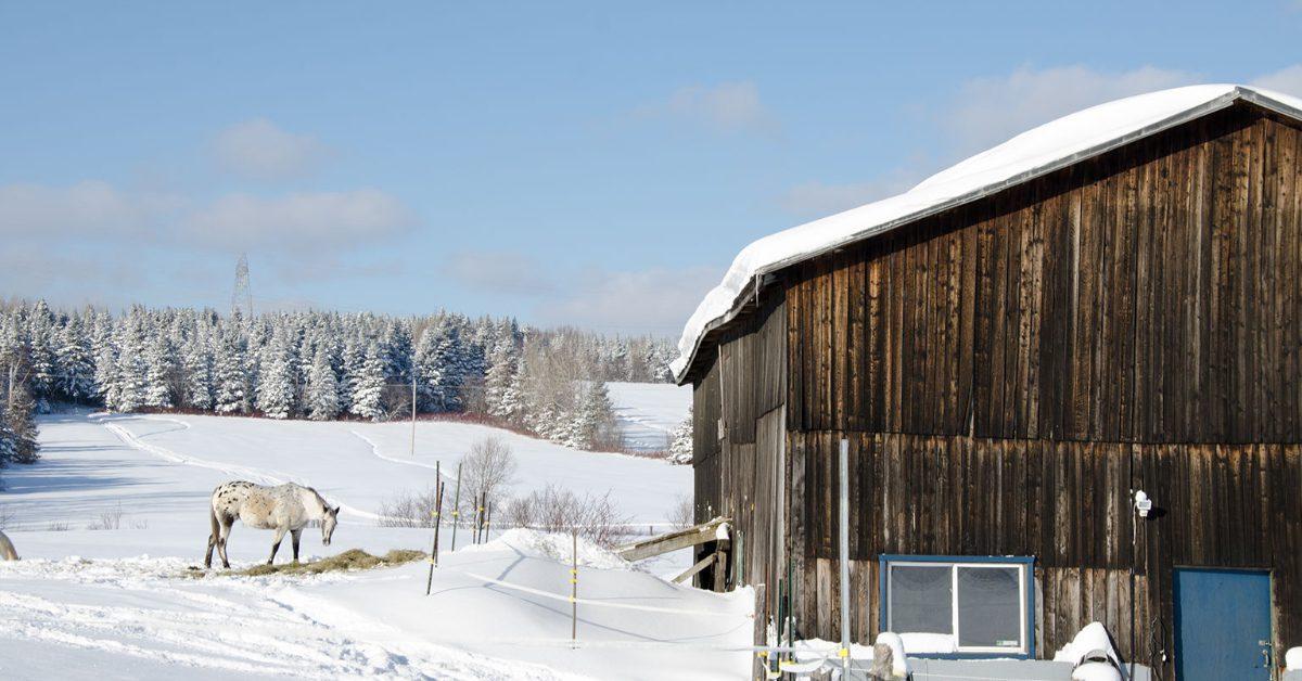Snowmaggedon in Quebec