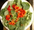 Jul N10: Nasturtium salad days
