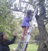 Oct 2011: our youngest pear picker