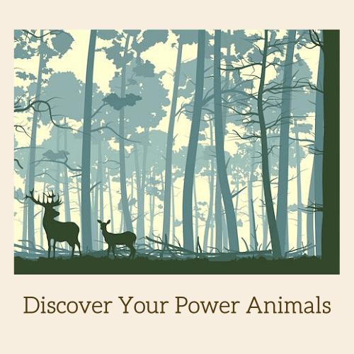 Animal Medicine Card Readings   Los Angeles
