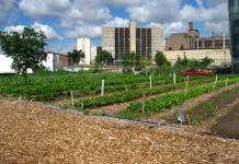 The Growing Dilemma - The problem with Urban Gardening  3