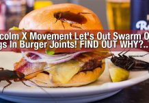 PROTEST: Malcolm X Movement Let's Out Swarm Of Bugs In Burger Joints! FIND OUT WHY?...