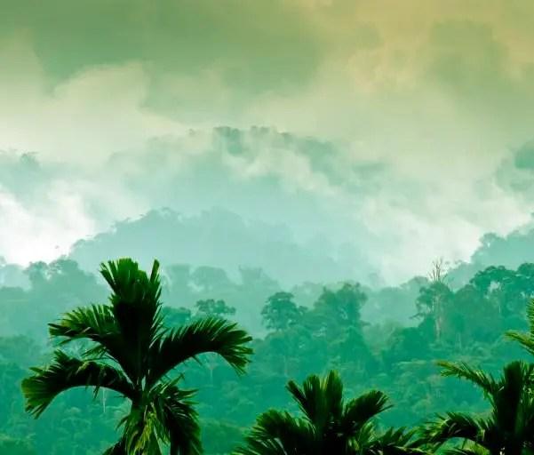 Floresta tropical na Ásia