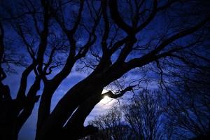hanging_tree1