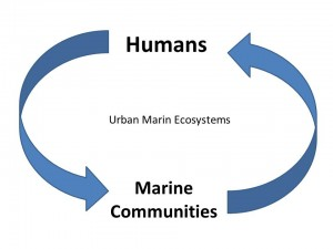 Graphical model of human and natural interactions in urban marine ecosystems
