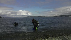 Divers entering water to collect soft sediment