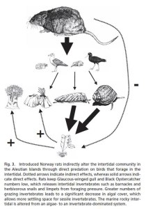 Food web diagram from Kurle et al. (2008)