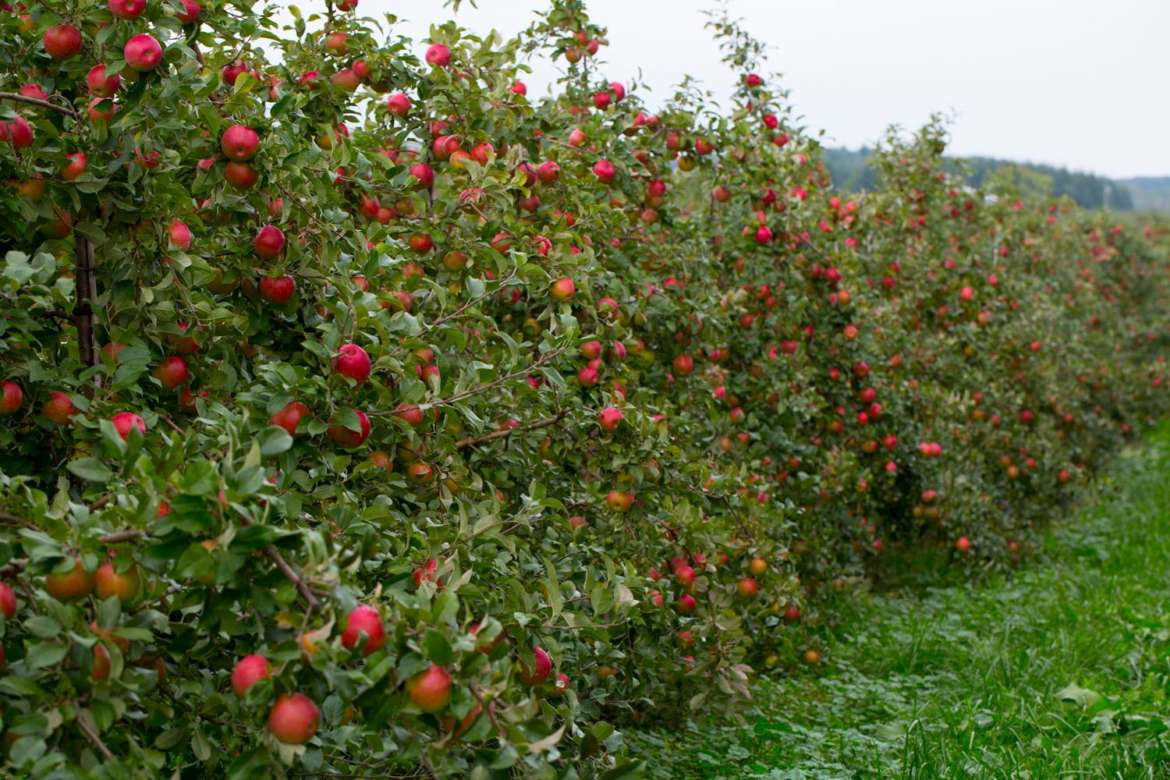 All Seasons Apple Orchard