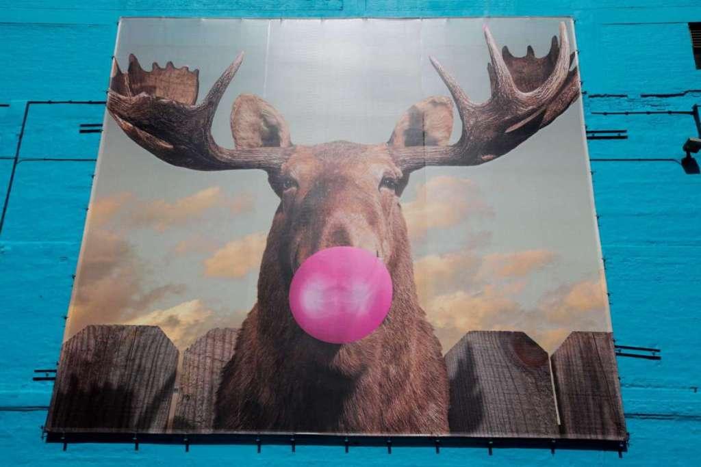 Moose Bubblegum Bubbles