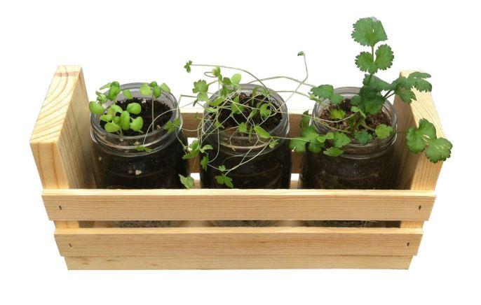 Growing Food Indoors - A Healthier Alternative