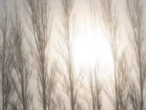 The february sun takes on the fog