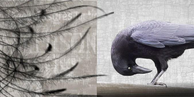 shopify yoga crow banner