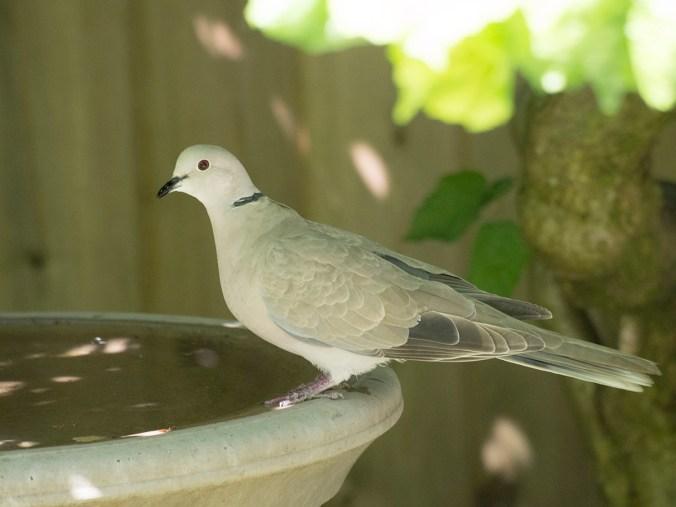 Everyone ends up at the birdbath