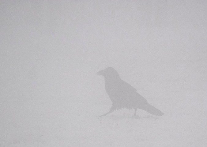 A ghostly figure in the fog and snow.