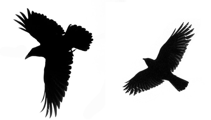 Crow and Raven Flying Silhouettes