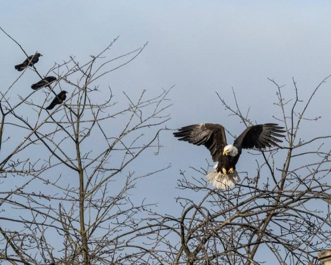 Eagle Hop