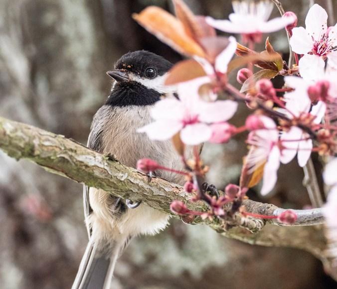 Sawdust beak