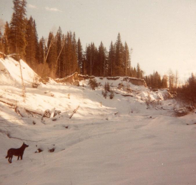 finlay in creek in winter