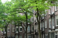 green residential areas