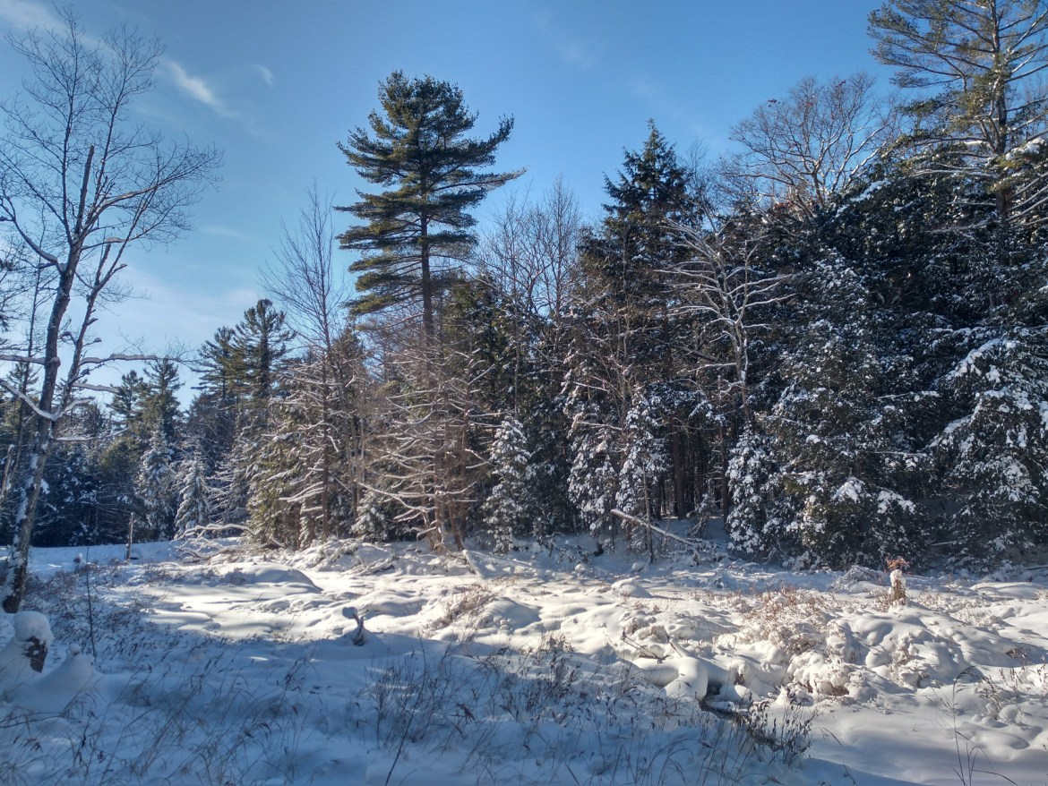 A stream bed is covered in snow at Silent Lake