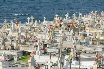 sea of crosses
