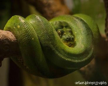 snake hammock