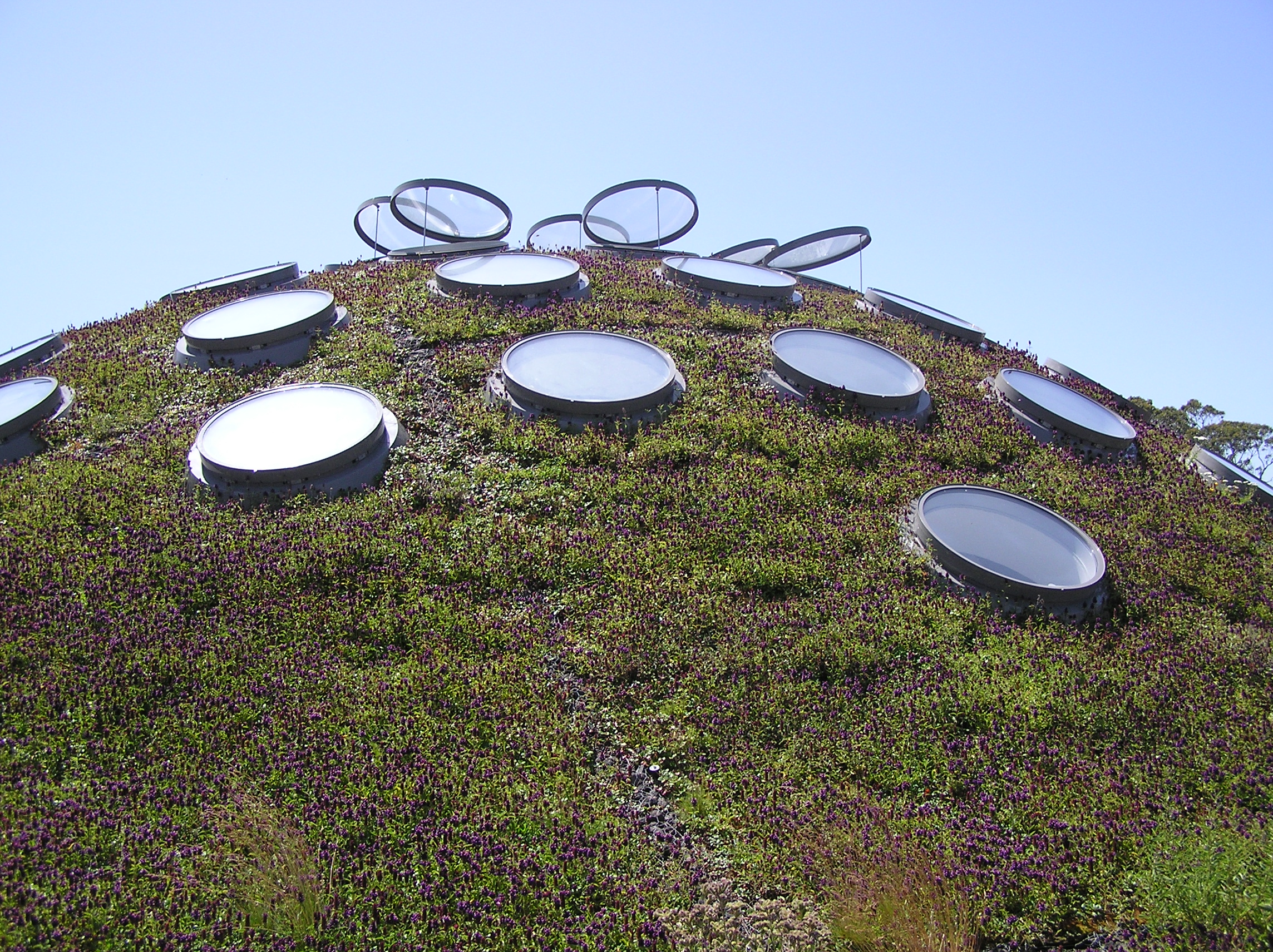 Green roof in San Francisco by Megan