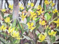 B Jessica Hart,Trout lilies on the mountain
