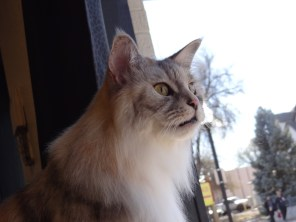 cat looking out salon window