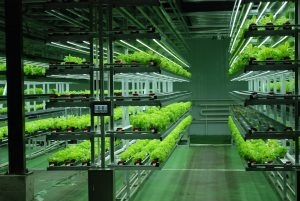 Hydroponic Racking System