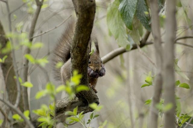 squirrel-i-640.jpg