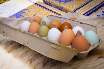 Eggs from the McKinley Farmers Market