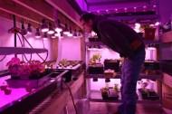 Greens Debut Restaurant Week 800x533