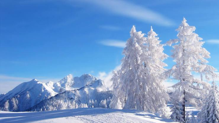 Pine-trees-in-the-mountains-covered-with-snow-wallpaper_2706