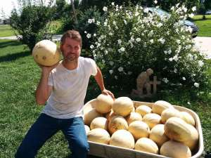 pauly-melons