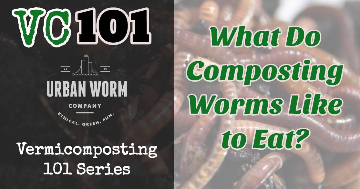 what-do-worms-like-to-eat