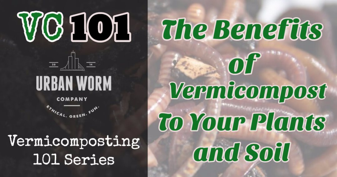 Vermicomposting 101: Plant and Soil Benefits of Vermicompost