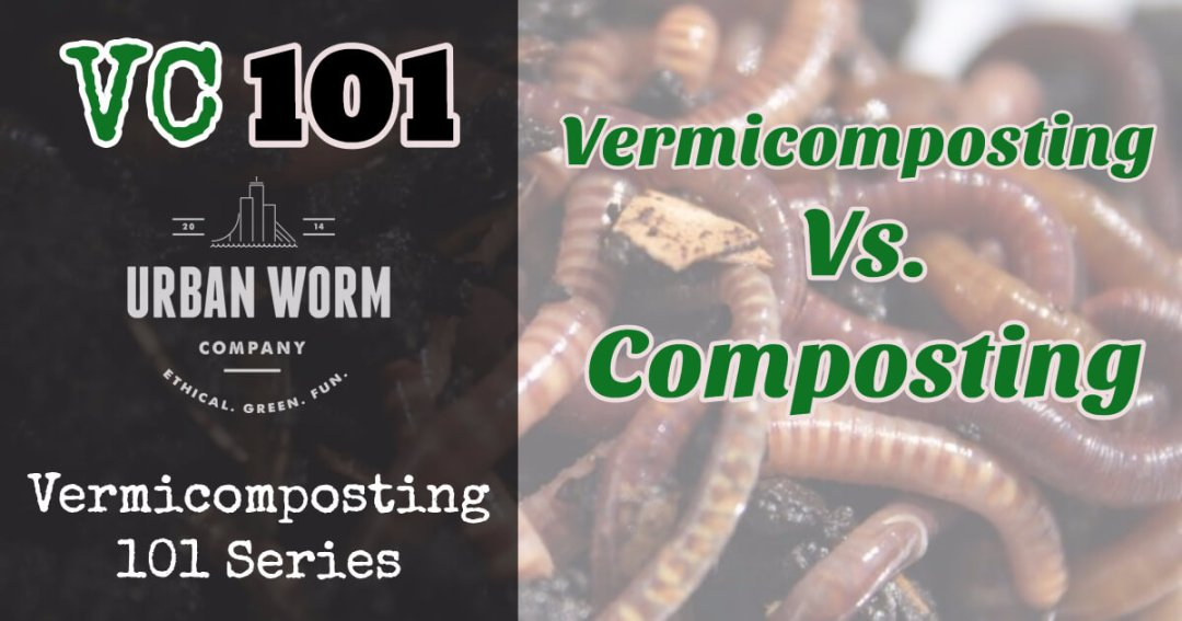 Vermicomposting 101: What Are the Differences Between Vermicomposting and Composting?