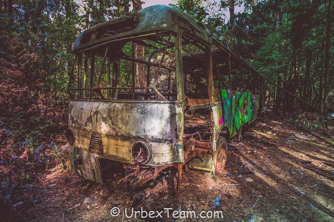 Jungle Bus